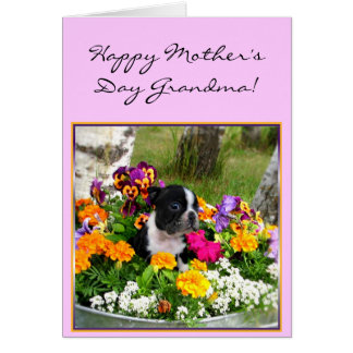 Happy Mother's day Grandma Boston Terrier card