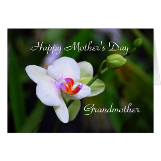 Happy Mother's Day Grandother Phalaenopsis Orchid Greeting Cards