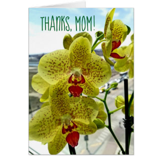 Happy Mother's Day Green Orchid