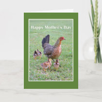 Happy Mother's Day Hen and Chicks Card