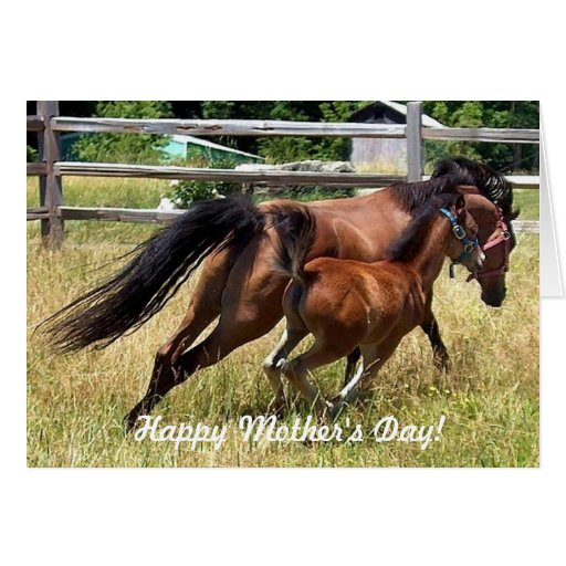 Happy Mother's Day Horse & Foal Card