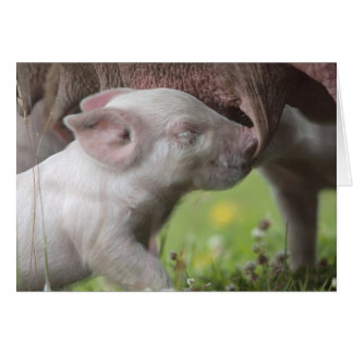Happy Mother's Day Nursing Piglet Card