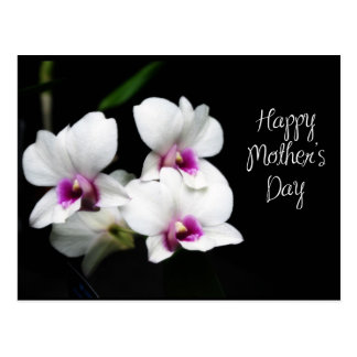 happy Mother's Day Orchids Postcard