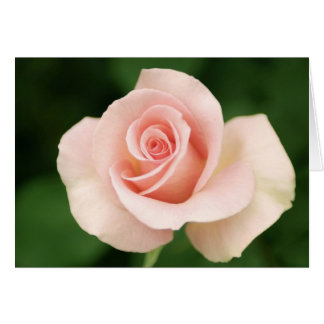 Happy Mother's Day Pink Rose Card