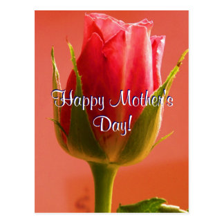 Happy Mother's Day Pink Rose I Postcard