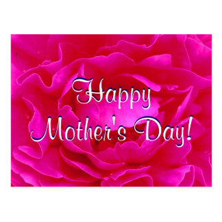 Happy Mother's Day Pink Rose Postcard
