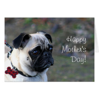 Happy+mother's+day+pug+greeting+card Card