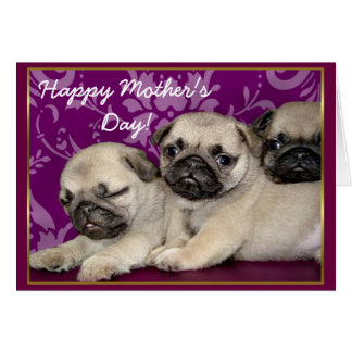 Happy Mother's Day Pug puppies greeting card