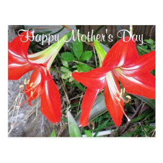 Happy Mother's Day Red Lily Postcard