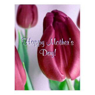 Happy Mother's Day Rosey Tulips Postcard