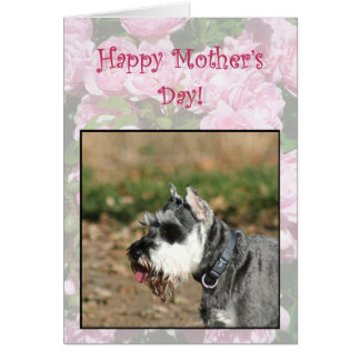 Happy Mother's Day Schnauzer dog greeting card