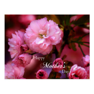 Happy Mothers Day Spring Pink Cherry Blossoms Postcard