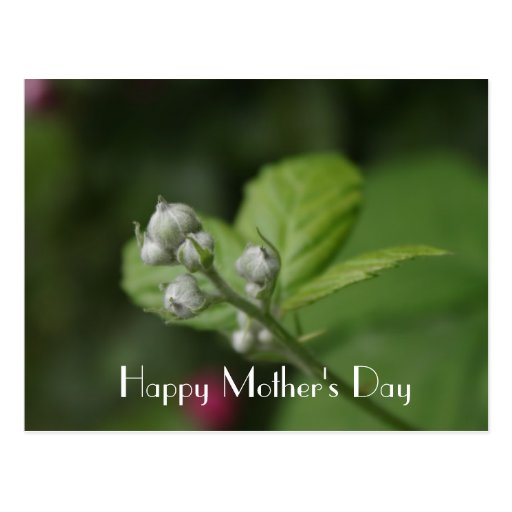 Happy Mother's Day, summer wild raspberry flower Postcard