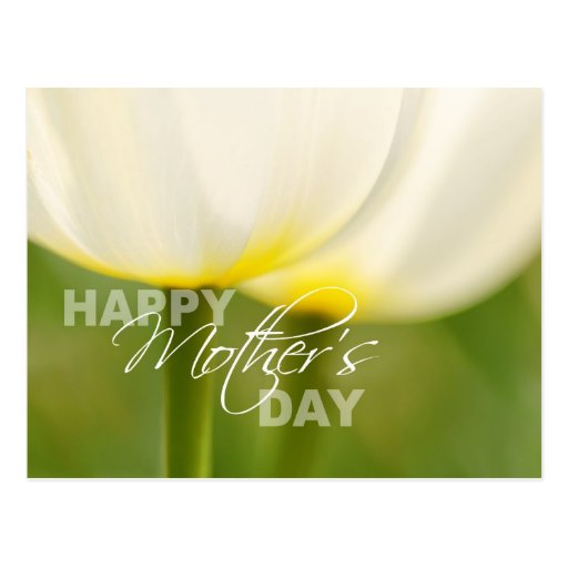 Happy Mother's Day Tulips Postcard
