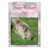Happy Mother's Day Weimaraner greeting card