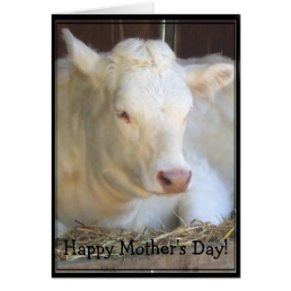 Happy Mother's Day White cow greeting card