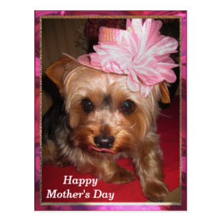 Happy Mother's Day Yorkie Post Cards