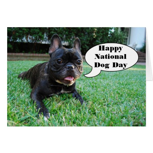 Happy National Dog Day French Bulldog Birthday Greeting Card