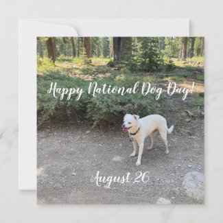 Happy National Dog Day!  Holiday Card