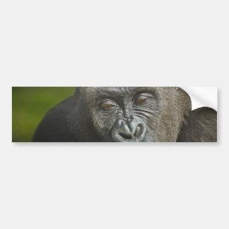 Happy New Year of the Monkey Gorilla Astrology Bumper Sticker