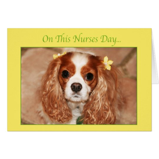Happy Nurses Day With Sweet Cavalier King Charles Card