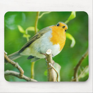 Happy Orange Robin with Funny Eyes in Leafy Tree Mouse Pad