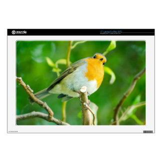 Happy Orange Robin with Funny Eyes in Leafy Tree Decal For Laptop