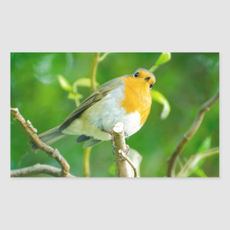 Happy Orange Robin with Funny Eyes in Leafy Tree Rectangle Stickers