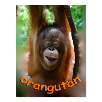 Happy Orangutan Postcard