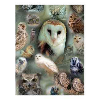 Happy Owls Post Card