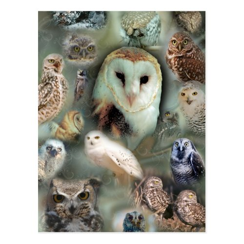 Happy Owls Postcard