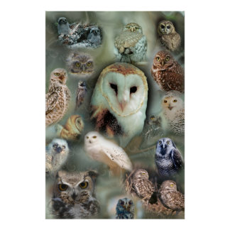 Happy Owls poster print