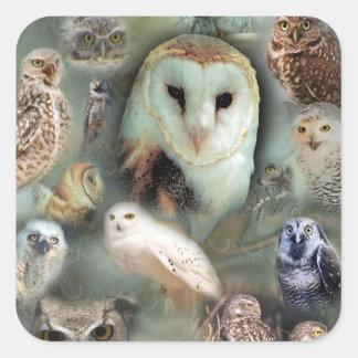 Happy Owls Square Sticker