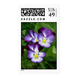 Happy Pansies-Violas Postage Stamp