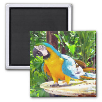 Happy Parrot 2 Inch Square Magnet