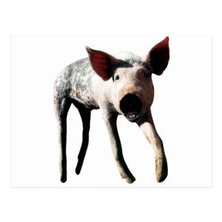 Happy Pig Long Leg Funny Postcard