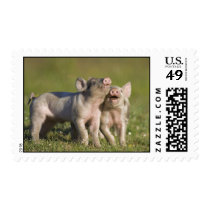 Happy Piggies Postage
