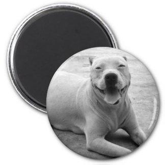 Happy pitbull magnet