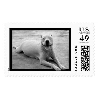 Happy pitbull postage stamp