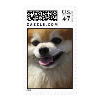 Happy Pomeranian (medium) Postage