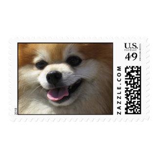 Happy Pomeranian Postage