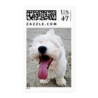Happy Puppy white dog, malteese, maltipoo. Postage