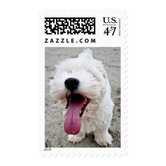 Happy Puppy white dog, malteese, maltipoo. Stamp