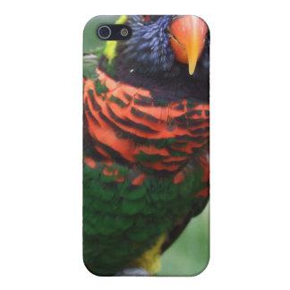 Happy Rainbow Lorikeet iPhone 4 Case