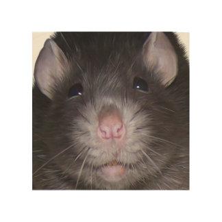 Happy Rat Derwent on a Birch Wood Canvas