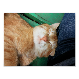 Happy Red Sleeping Cat Poster