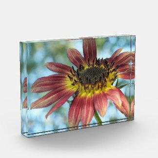 Happy Red Sunflower in Acrylic Acrylic Award