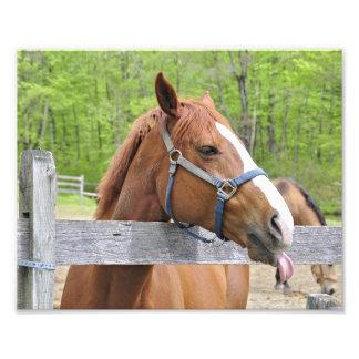 Happy Riding Horse Photographic Print
