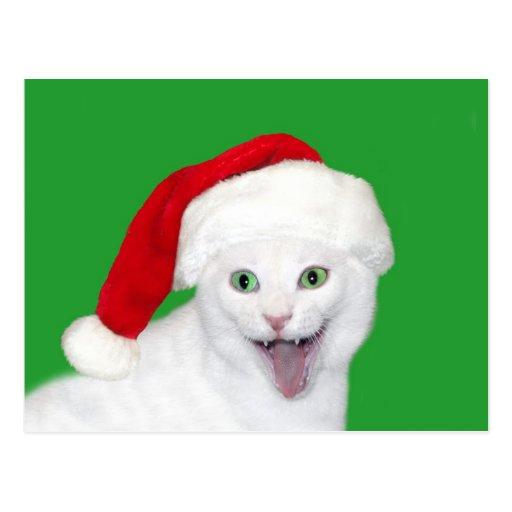 Happy Santa Cat Postcard
