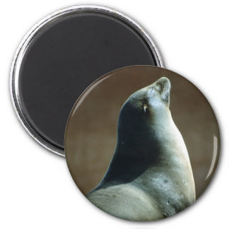 Happy Seal 2 Inch Round Magnet